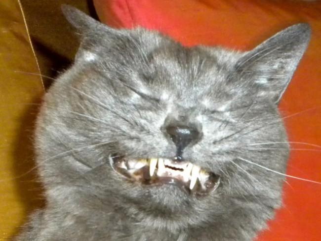 sneezing cats 7