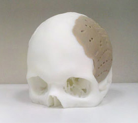 fake skull