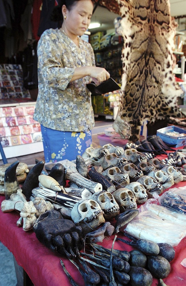 HOLD FOR RELEASE AT 8:01 P.M. EDT; THIS STORY MAY NOT BE POSTED ONLINE, BROADCAST OR PUBLISHED BEFORE 8:01 P.M. EDT** FILE ** A Myanmar vendor in the border town of Tachilek, just across from Mae Sai, Thailand, offers endangered animal bones and skins for sale to tourist in a Saturday, Nov. 25, 2003 file photo. Almost a third of all apes, monkeys and other primates are in danger of extinction because of rampant habitat destruction, the commercial sale of bush meat and the trade in illegal wildlife, a report released Friday, October 25, 2007, said. (AP Photo/David Longstreath, File) Ref #: PA.5280240  Date: 12/10/2007