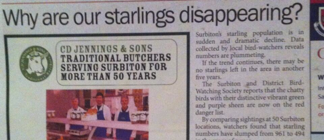Screen shot 2014 03 10 at 09.05.48 Newspaper Juxtaposition Laugh In: Why are Surbitons Starlings Disappearing?