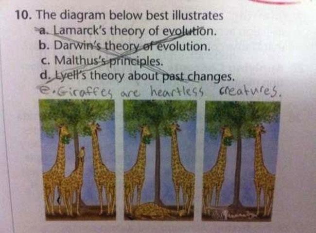 answers 31