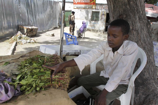 FILE - In this photo taken Wednesday July 12, 2012 Isaq Abdi sits beside bundles of khat which he sells for his employer in Mogadishu, Somalia. The British government says Wednesday July 3 2013 that it is banning khat, an herbal stimulant, despite advice against such a move by an official advisory body. Khat, also known as cathonine, is popular in parts of the Middle East and Africa, where users chew the leaf to release stimulants that produce a mild high. (AP Photo/Farah Abdi Warsameh, file)