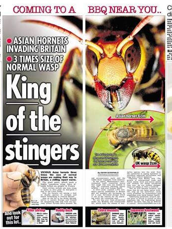 Screen shot 2014 04 16 at 07.11.47 Massive Asian Hornets Are Going To Kill Us All