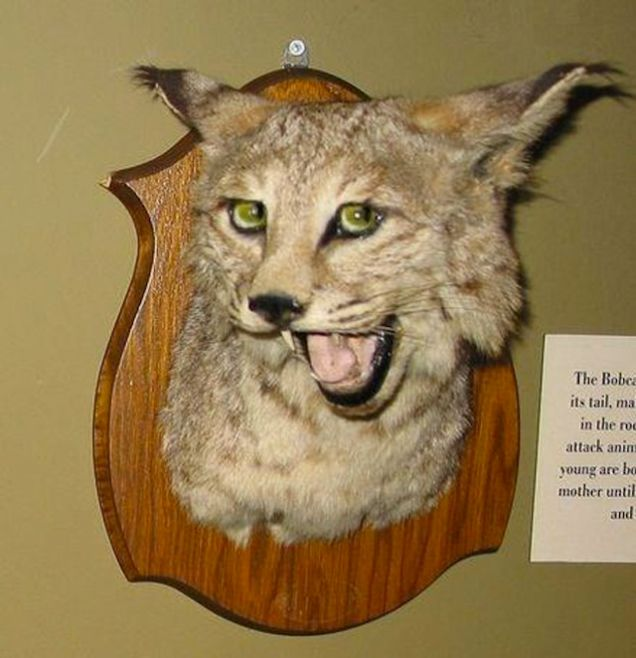 taxidermy 11