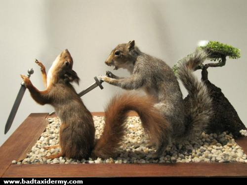 taxidermy 18
