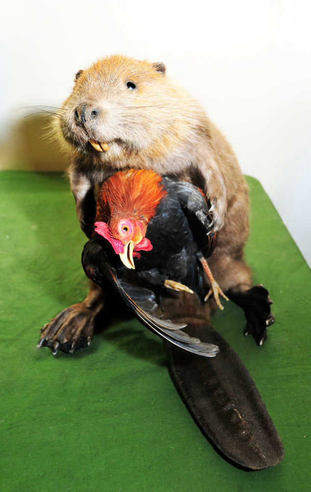 taxidermy 9