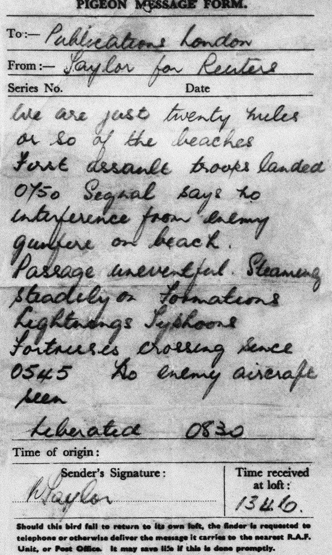 Gustav the Pigeon's report from the beaches of Normandy, 6 June, 1944.
