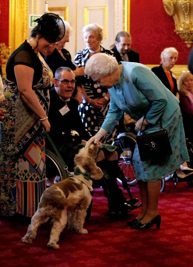 Queen Elizabeth II pets Harris, a PAT dog, during a reception for Leonard Cheshire Disability in the State Rooms, St James's Palace, London. Picture date: Thursday May 29, 2014. Photo credit should read: Jonathan Brady/PA Wire Ref #: PA.19965192  Date: 29/05/2014
