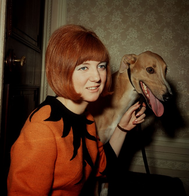 "30/7/64 CILLA BLACK AND GREYHOUND ""RINGO"" WHEN SHE MADE THE DRAW FOR THE FIRST ROUND OF THE 1964 NATIONAL INTER-TRACK GREYHOUND CHAMPIONSHIP"