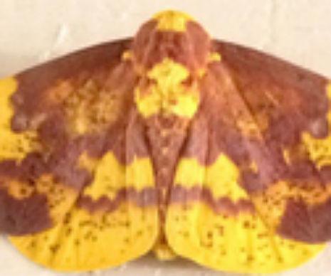 moth jesus 1