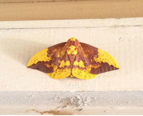 moth jesus