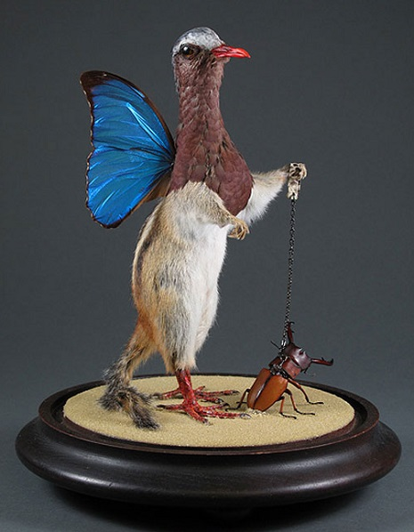 taxidermy 13