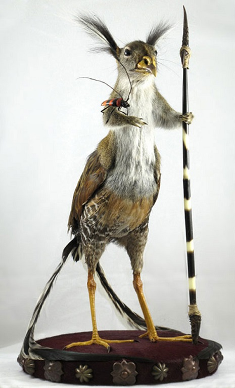 taxidermy 5