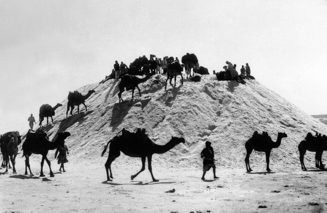 "Caravans of camels conveying salt from the rivers and seas of ancient Syria to a ""salt mountain"" near Aleppo, Syria on August 23, 1938, one of the oldest cities in the world. (AP Photo)"
