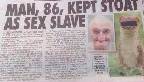 sex stoat