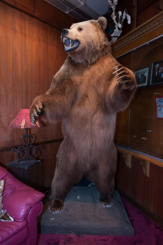 Estimate: $2,000 - $3,000 Starting: $1,000 A full body mounted brown Kodiak bear in aggressive pose.