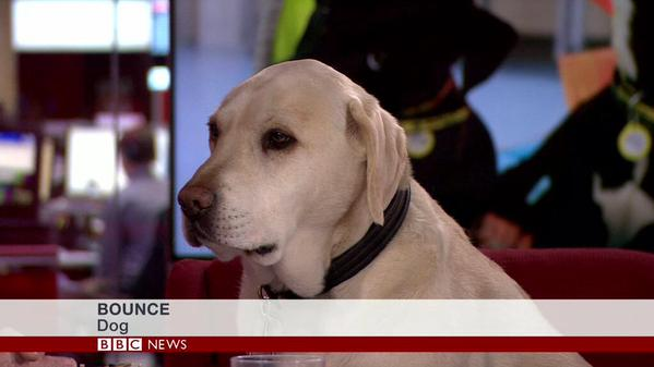 dog on the telly