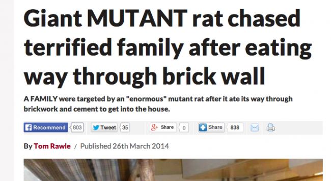 killer giant invading german scottish rats britain daily star, daily express tabloids