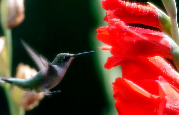See what happens when you stick a hummingbird in a wind tunnel