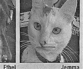 jemmacat