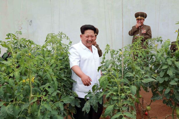kim jong un vegetables
