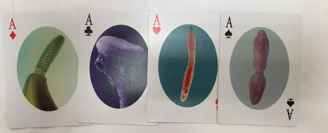 playing cards parasites