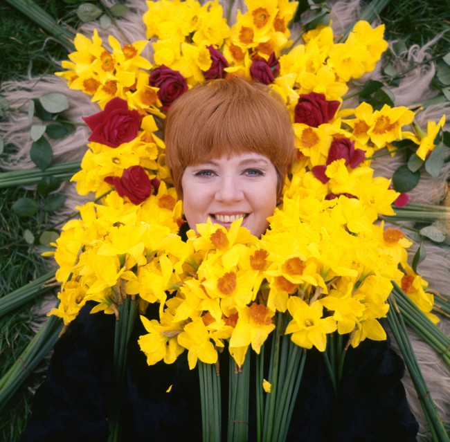 circa 1970:  Cilla Black, formerly Priscilla White, a Liverpudlian singer discovered and managed by Brian Epstein, framed by a heap of daffodils.  (Photo by Keystone/Getty Images)