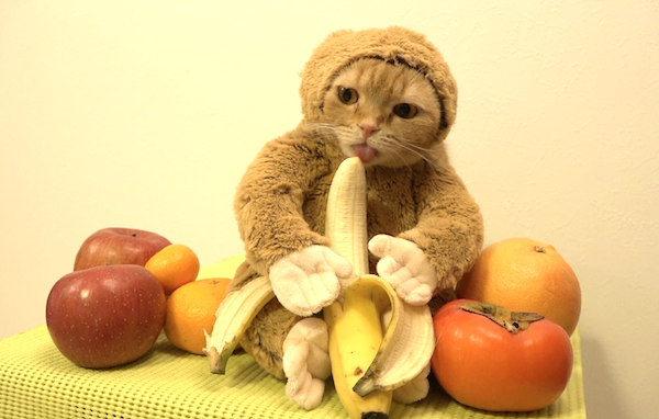 cat-banana monkey suit