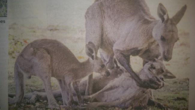 kanga dead sex