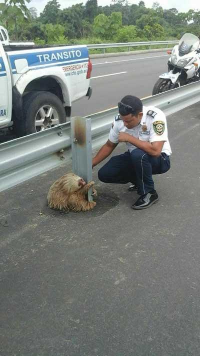 sloth 3
