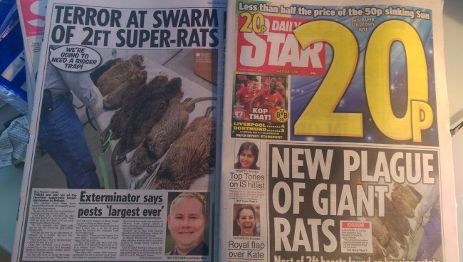 rats daily star