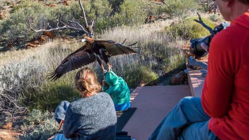 eagle boy australia park