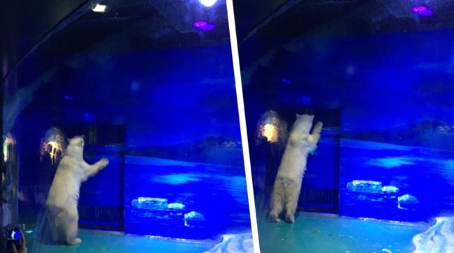 Guangzhou aquarium
