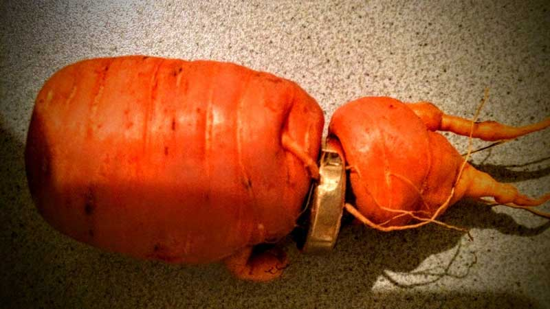 carrot wedding ring