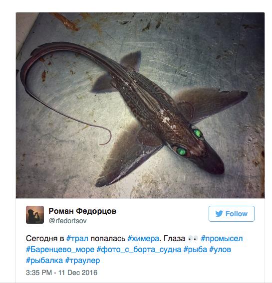 hideous strange weird fish