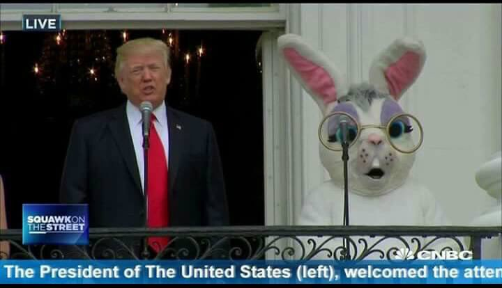 trump bunny left caption