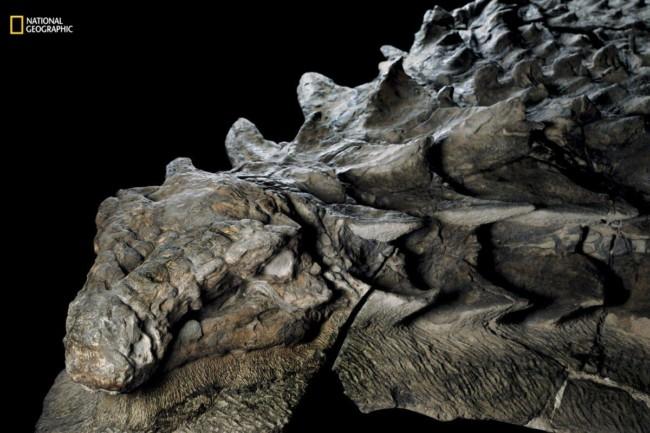 fossil found skin