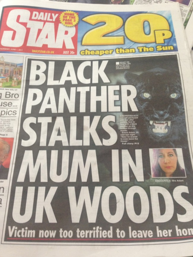 daily star black panther