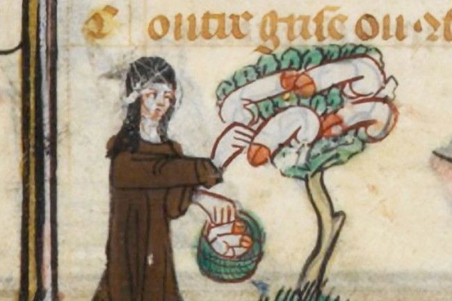 "Medieval French manuscript showing nuns picking ""fruit"" from ""a medieval penis tree""."