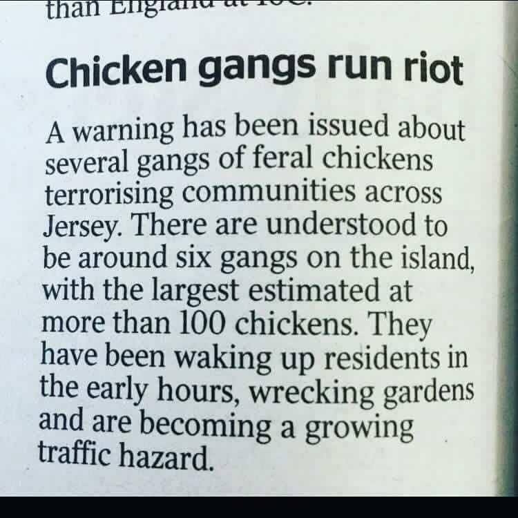 chicken gangs jersey