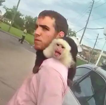 monkey driver cam