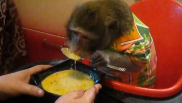 Queen monkey bananas