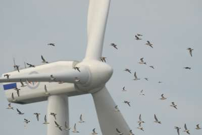 BirdsAndTurbine Wind Farms Kills 440,000 Birds Every Year: Cats Still Winning