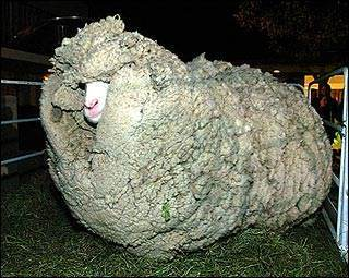 Man having sex with sheep galleries 86