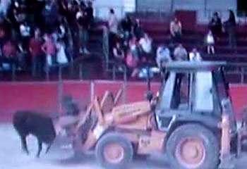 bulldozer-bull.jpg
