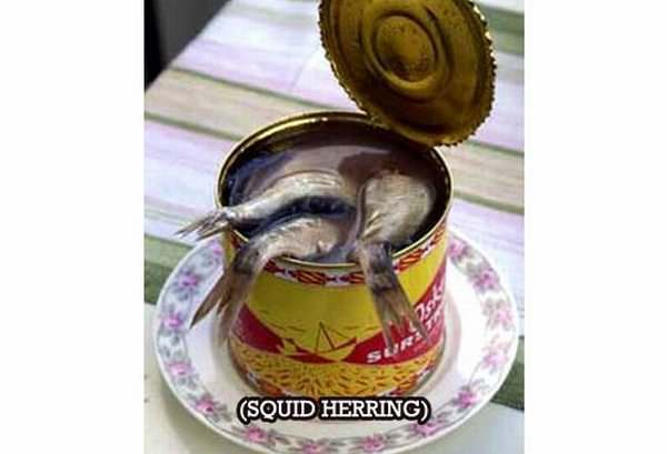 canned-herring-squid