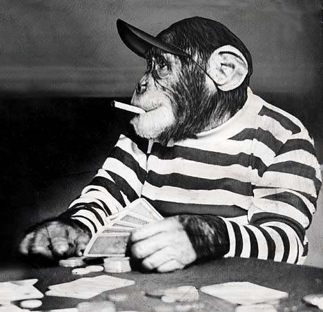 chimps-picture.jpg