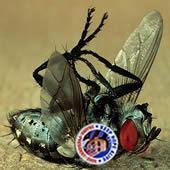 dead-obama-fly