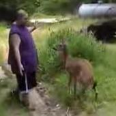 deer attack When Bambi Attacks: Deer Mauls Man