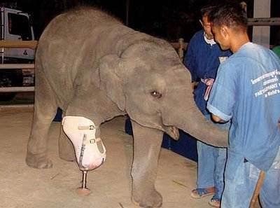 elephant-leg1